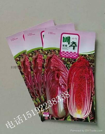 紫白菜種子 4