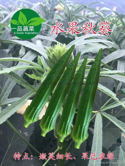 綠灞水果黃秋葵種子 1