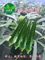 綠灞水果黃秋葵種子