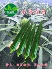水果黃秋葵種子