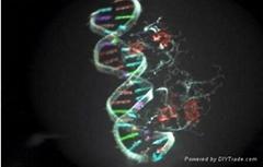 E. Coli Protein Inductor