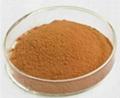 reishi mushroom extract 1