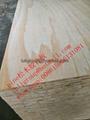松木胶合板多层板 3